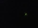 <h5>Glow worm</h5>
