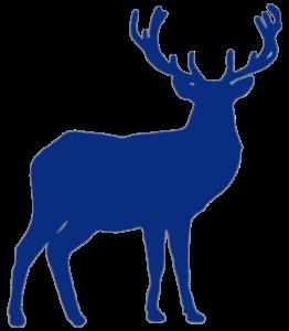 Blue Stag Trans v1