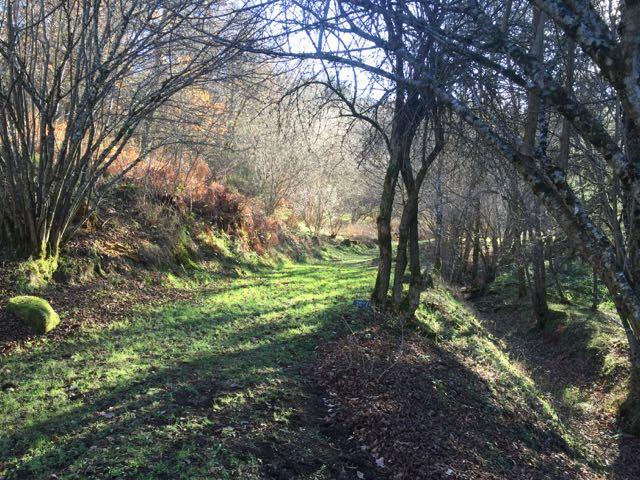 Mill Woods